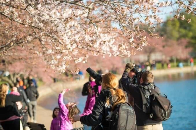 Cherry Blossoms in Washington DC COPYRIGHT HAVECAMERAWILLTRAVEL.COM  678x452 - What to Expect, When