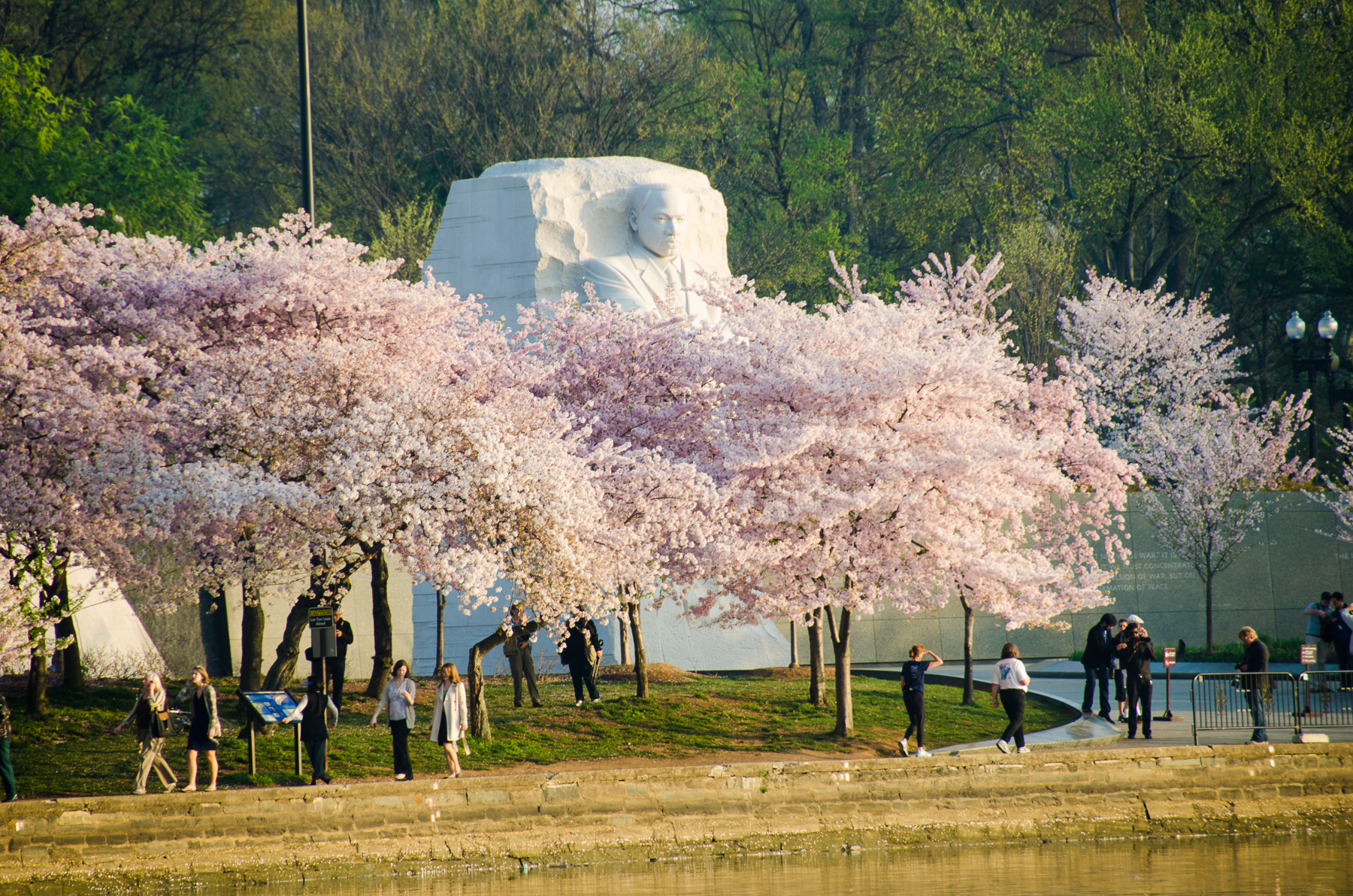 NPS Revises the 2016 Peak Bloom Forecast