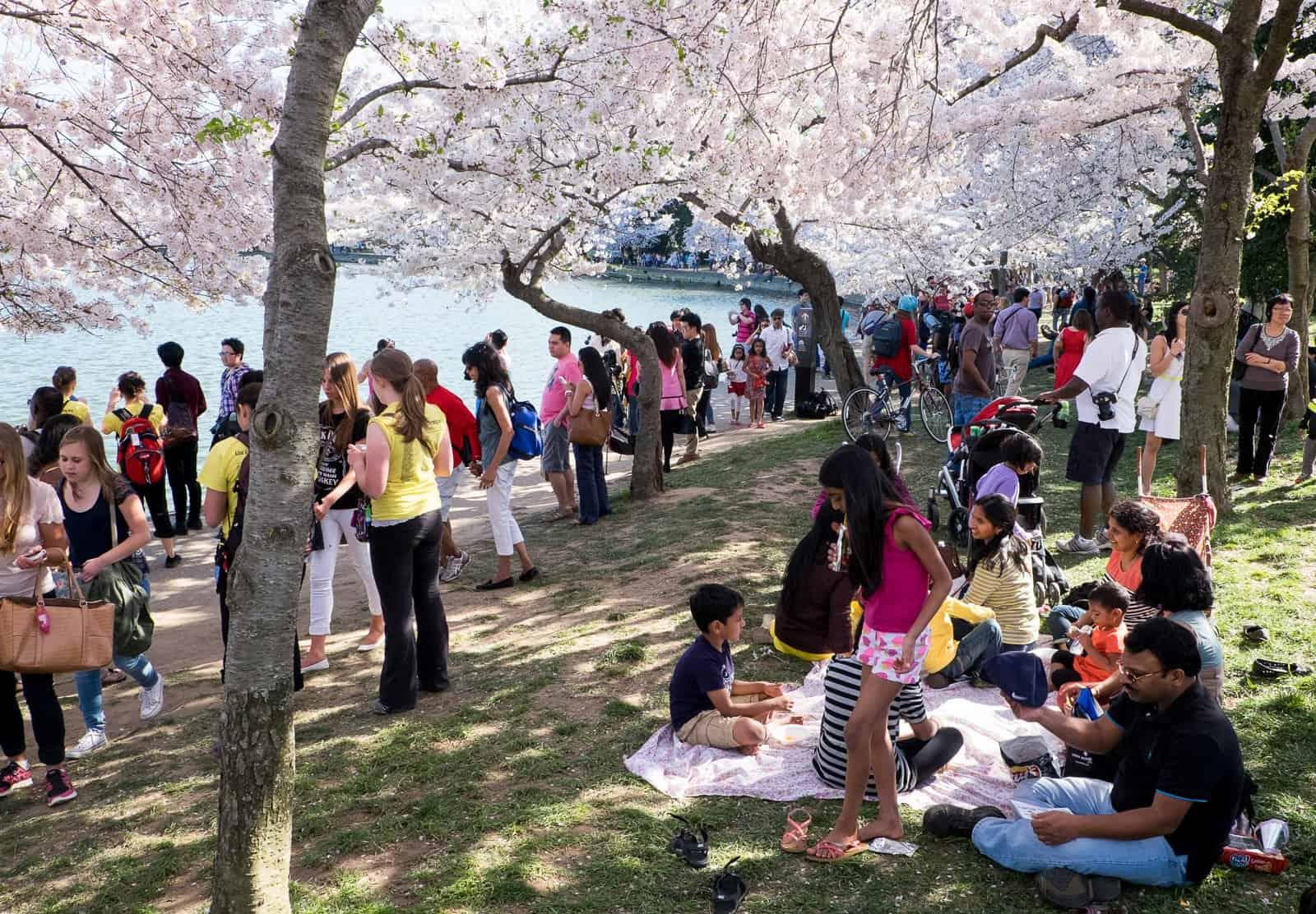 Cherry Festival 2020.2020 Cherry Blossom Festival Washington Dc Cherry