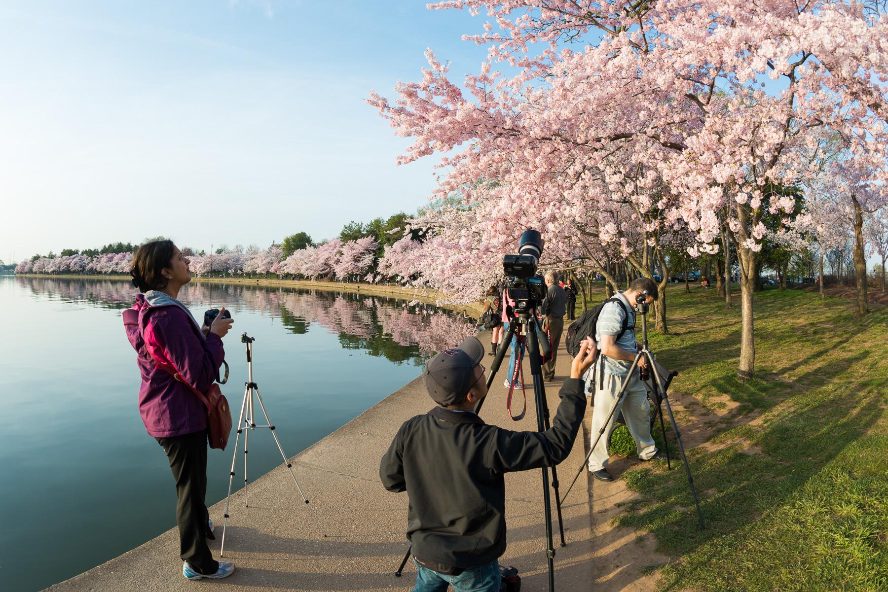 2016 Cherry Blossom Watch // Washington DC