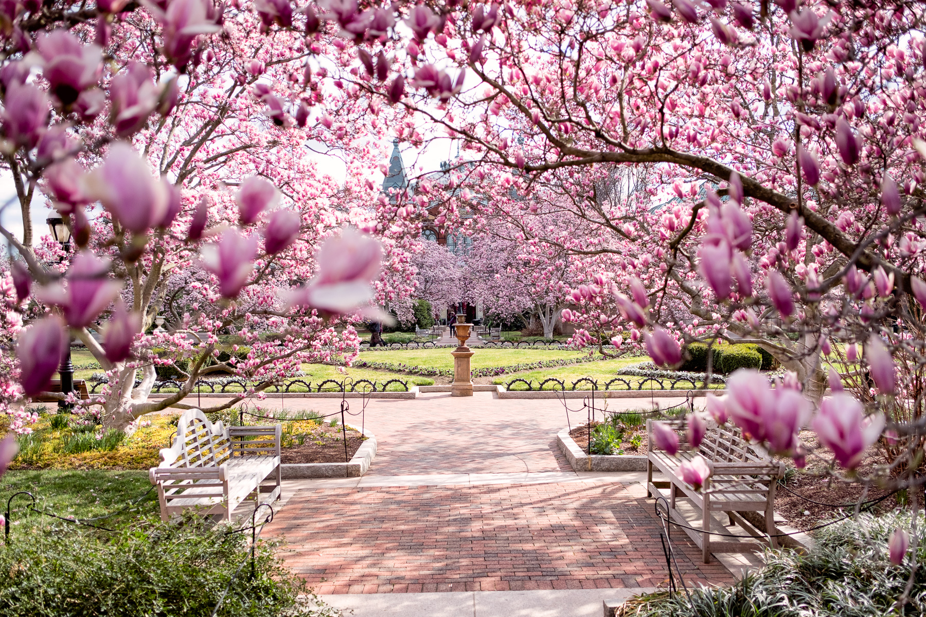 Washington Dc Cherry Blossom Watch 2019