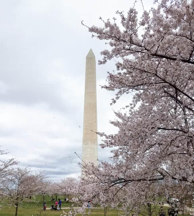 Cherry Blossom Photos 2017