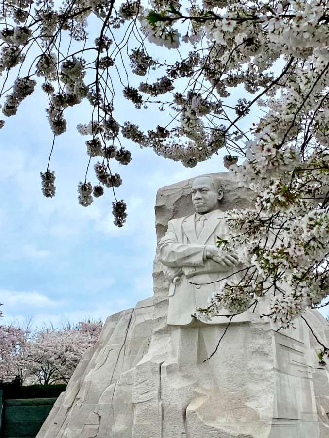 washington dc cherry blossoms april 02 2021 06 cherryblossomwatch com 1 678x904 - Reader Photos 2021   Part 2