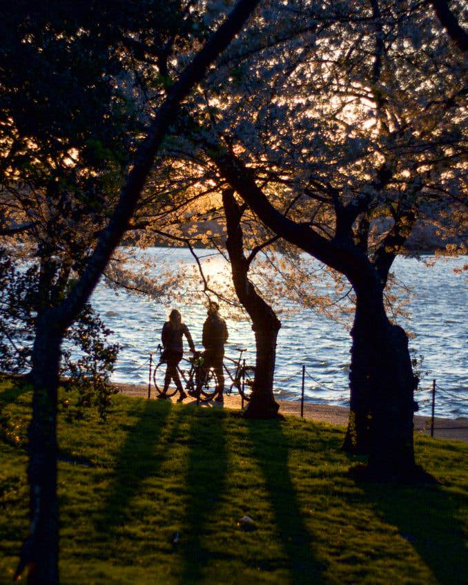 washington dc cherry blossoms april 02 2021 38 cherryblossomwatch com 1 678x847 - Reader Photos 2021 | Part 1