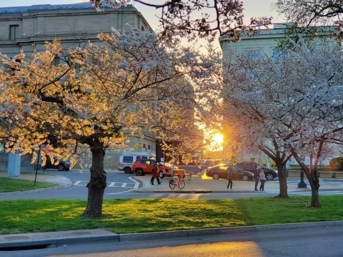 washington dc cherry blossoms april 03 2021 14 cherryblossomwatch com 678x509 - Reader Photos 2021   Part 2