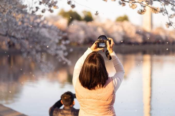 washington dc cherry blossoms april 03 2021 18 cherryblossomwatch com 678x452 - Reader Photos 2021   Part 2