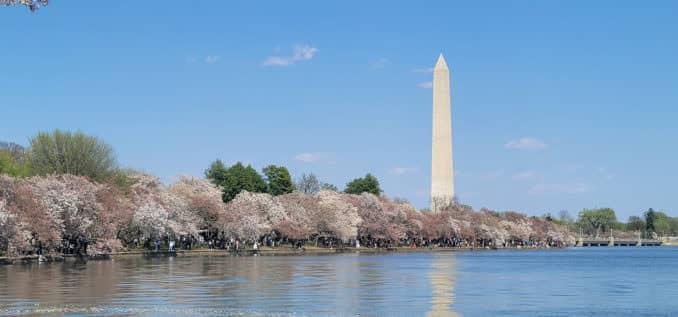 washington dc cherry blossoms april 04 2021 20 cherryblossomwatch com 678x317 - Reader Photos 2021   Part 2