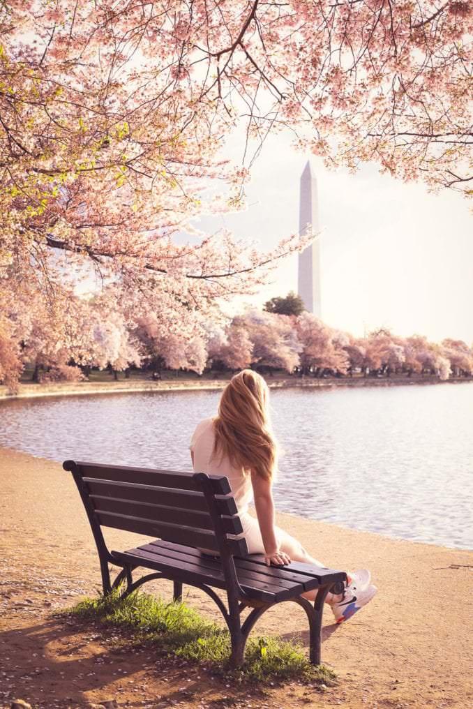 washington dc cherry blossoms april 06 2021 38 cherryblossomwatch com 678x1016 - Reader Photos 2021   Part 2