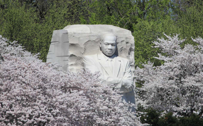 washington dc cherry blossoms march 29 2021 15 cherryblossomwatch com 678x422 - Reader Photos 2021 | Part 1