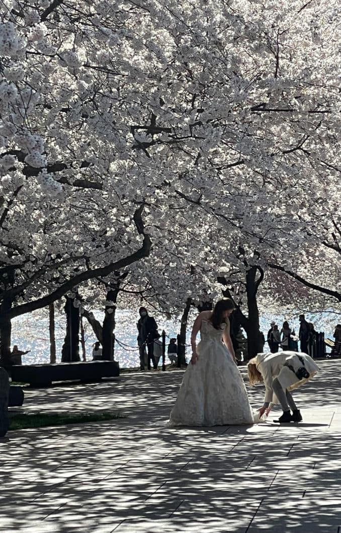 washington dc cherry blossoms march 30 2021 24 cherryblossomwatch com 678x1059 - Reader Photos 2021 | Part 1